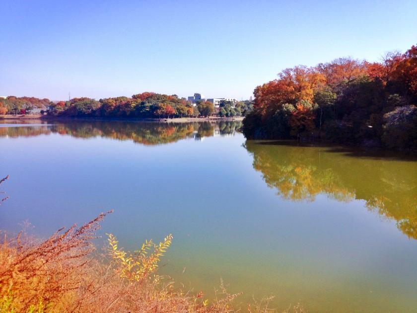 Nagoya autumn leaves